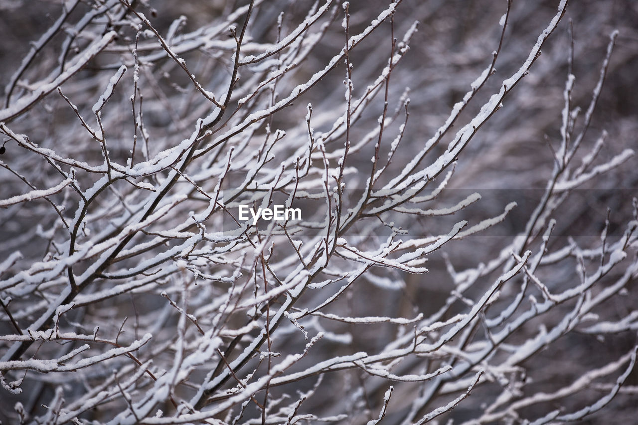 plant, branch, cold temperature, winter, tree, snow, nature, no people, focus on foreground, close-up, beauty in nature, twig, day, frozen, tranquility, bare tree, outdoors, full frame, selective focus, ice, dead plant, complexity, coniferous tree