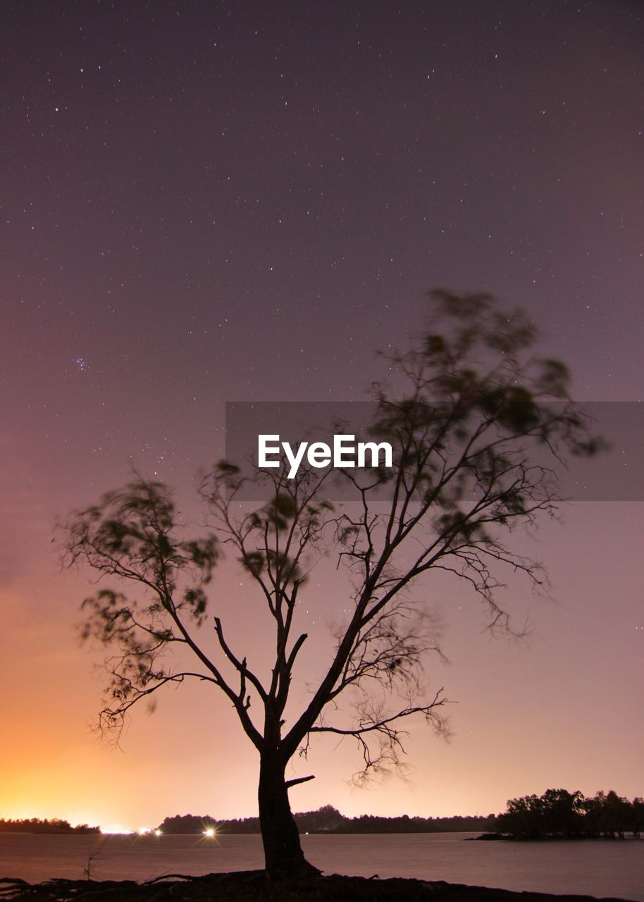sky, scenics - nature, tree, beauty in nature, tranquility, night, tranquil scene, star - space, space, plant, silhouette, astronomy, nature, no people, star, non-urban scene, idyllic, sunset, star field, land, outdoors, moonlight