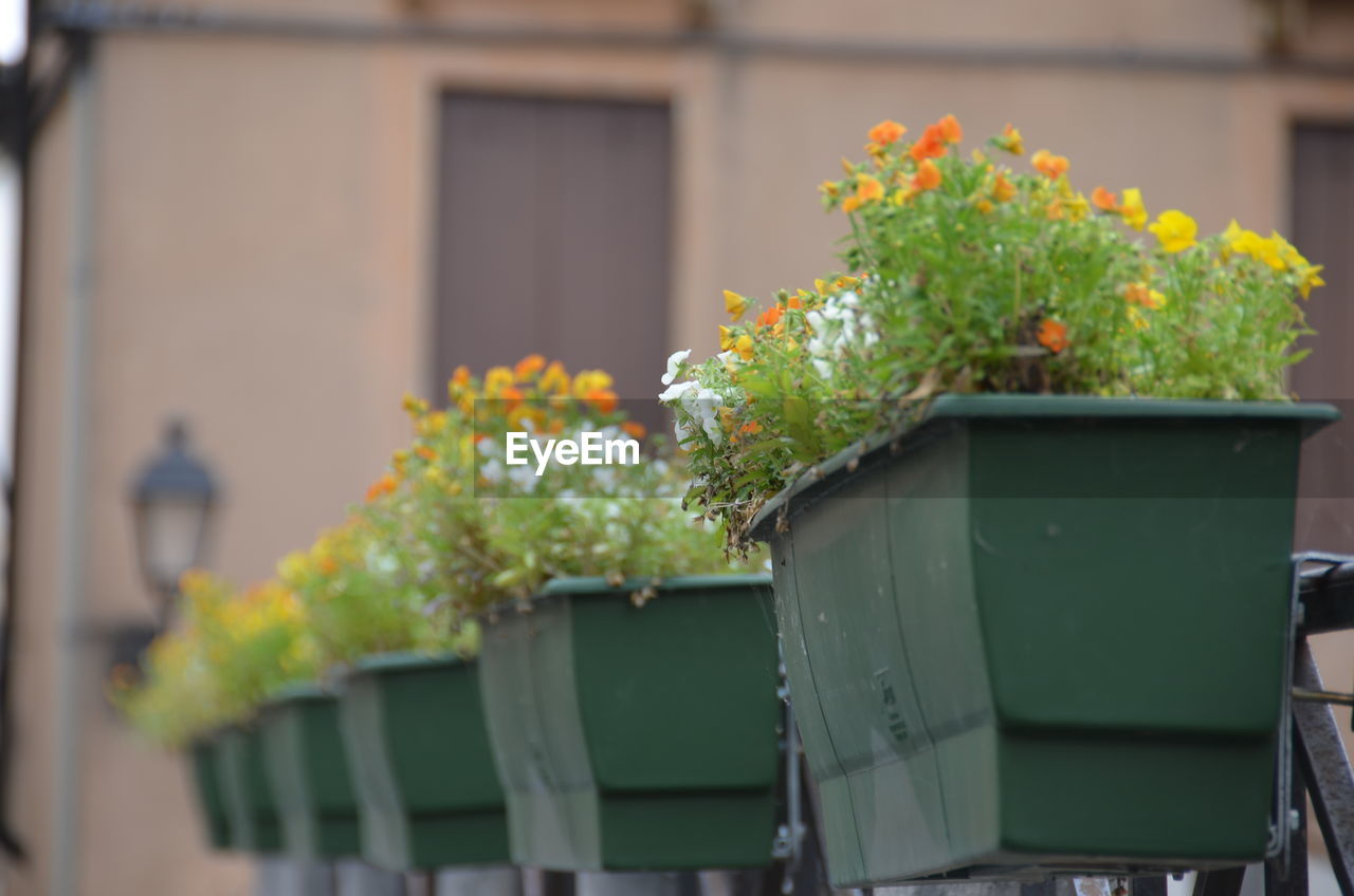 Close-up of window boxes on balcony