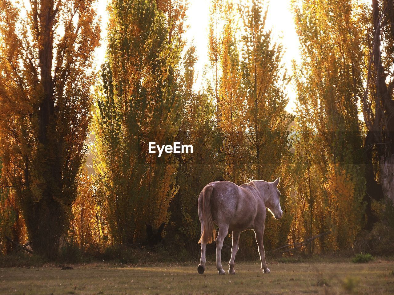 Rear view of a horse against trees