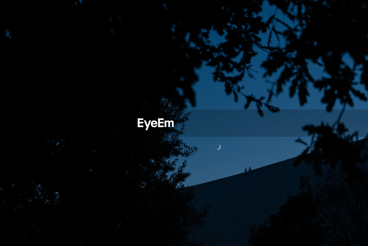 sky, tree, plant, silhouette, night, moon, beauty in nature, nature, low angle view, scenics - nature, tranquility, astronomy, space, no people, branch, growth, outdoors, tranquil scene, blue, non-urban scene, planetary moon, moonlight, space and astronomy