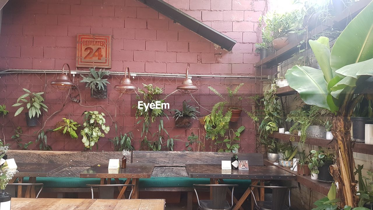 plant, architecture, built structure, growth, building exterior, day, nature, no people, potted plant, seat, building, table, front or back yard, outdoors, chair, wood - material, brick, wall - building feature, wall, plant part