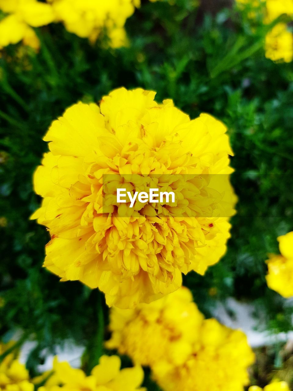 flower, yellow, petal, beauty in nature, fragility, flower head, nature, freshness, growth, plant, close-up, focus on foreground, outdoors, no people, day, blooming