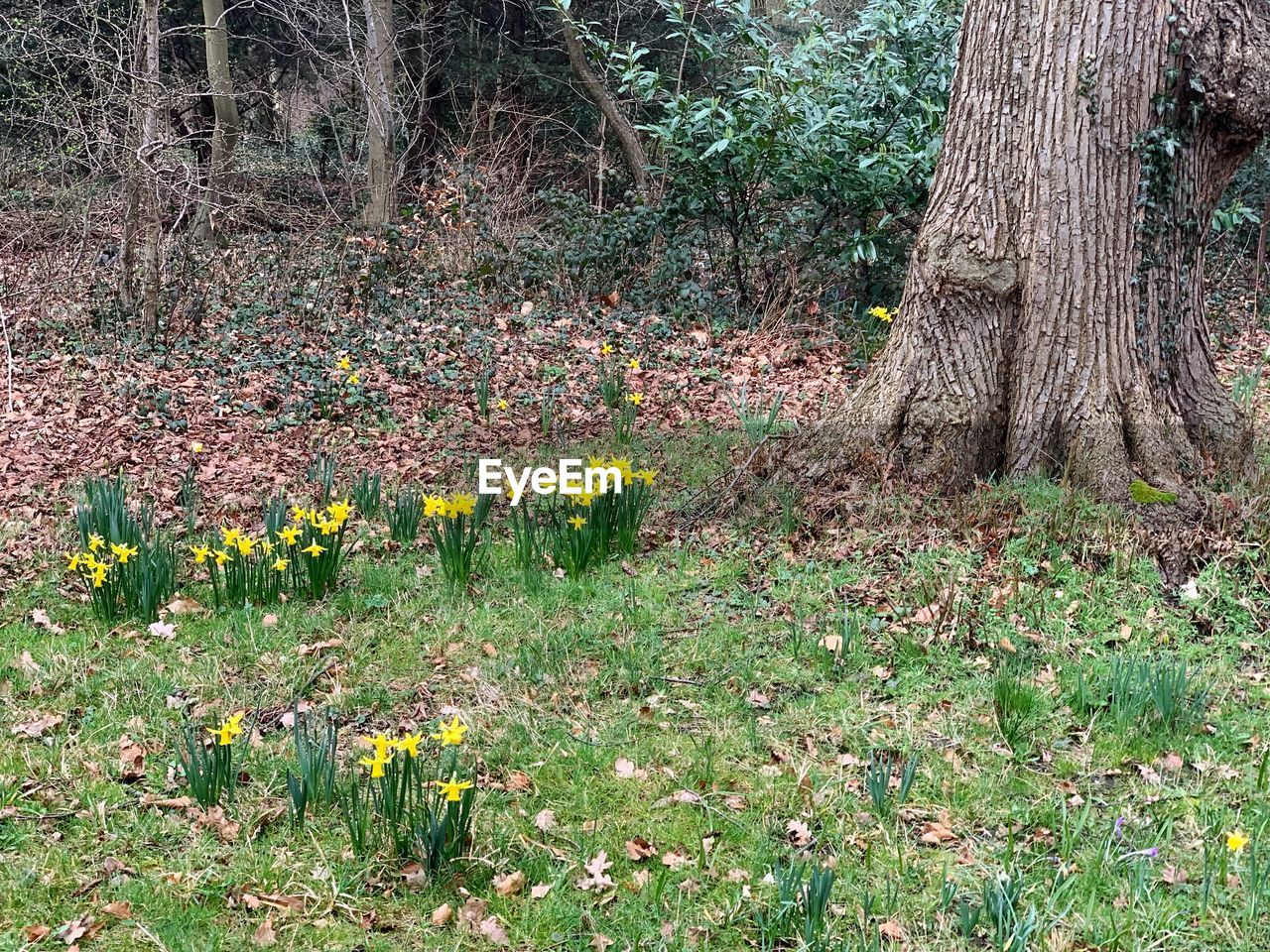 plant, tree, trunk, tree trunk, land, growth, forest, tranquility, nature, beauty in nature, field, flower, flowering plant, no people, day, green color, yellow, tranquil scene, scenics - nature, grass, outdoors, woodland