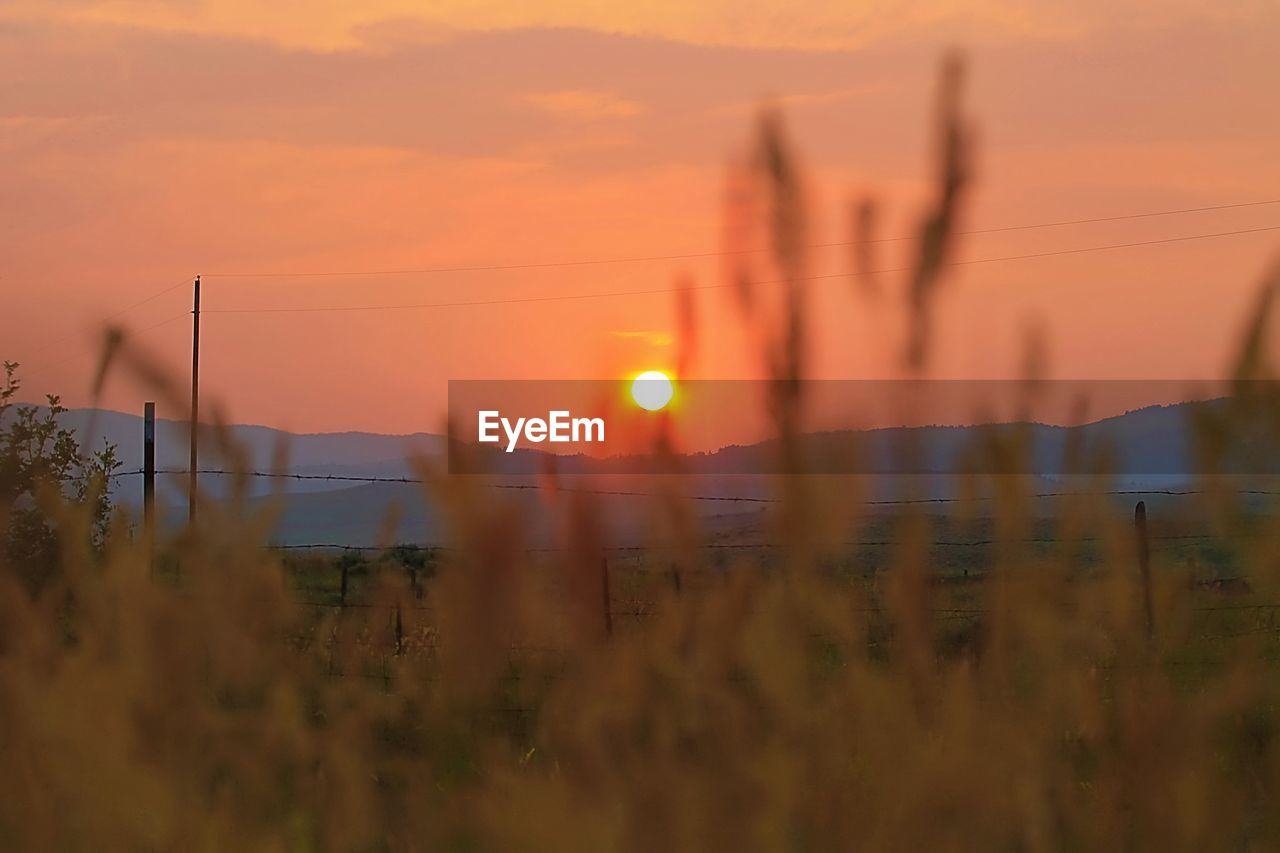 sunset, sky, orange color, beauty in nature, nature, selective focus, field, focus on background, plant, scenics - nature, sun, land, tranquility, growth, outdoors, no people, tranquil scene, cloud - sky, environment, idyllic