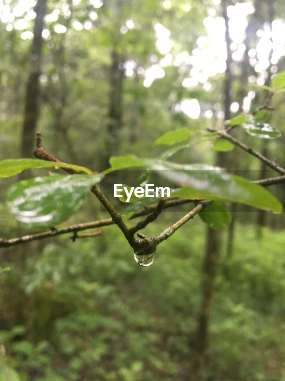 nature, growth, plant, leaf, focus on foreground, green color, no people, beauty in nature, day, outdoors, close-up, tree, branch, fragility, freshness, animal themes, water