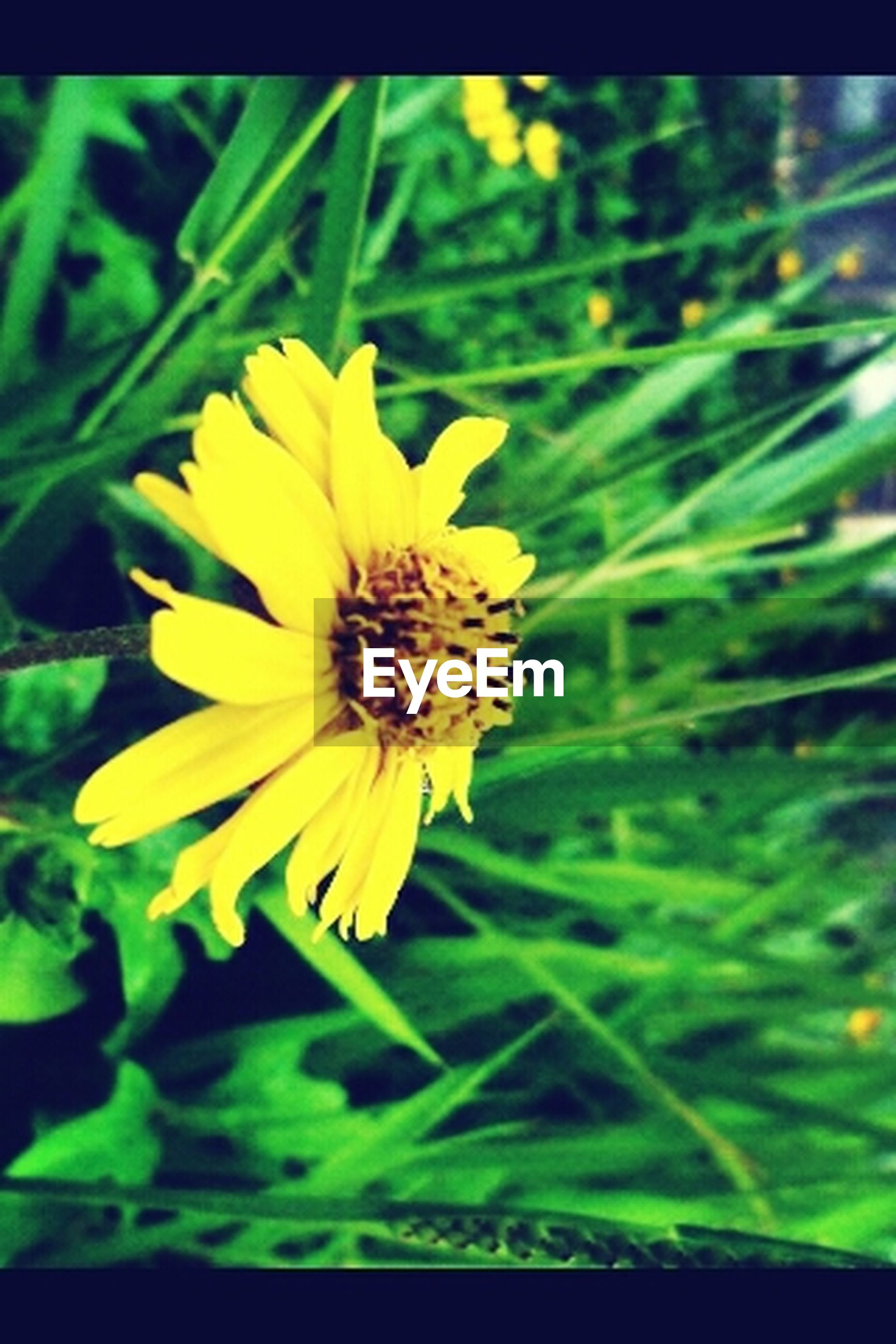 flower, yellow, petal, freshness, fragility, flower head, growth, beauty in nature, focus on foreground, close-up, blooming, nature, plant, single flower, in bloom, pollen, field, selective focus, outdoors, park - man made space