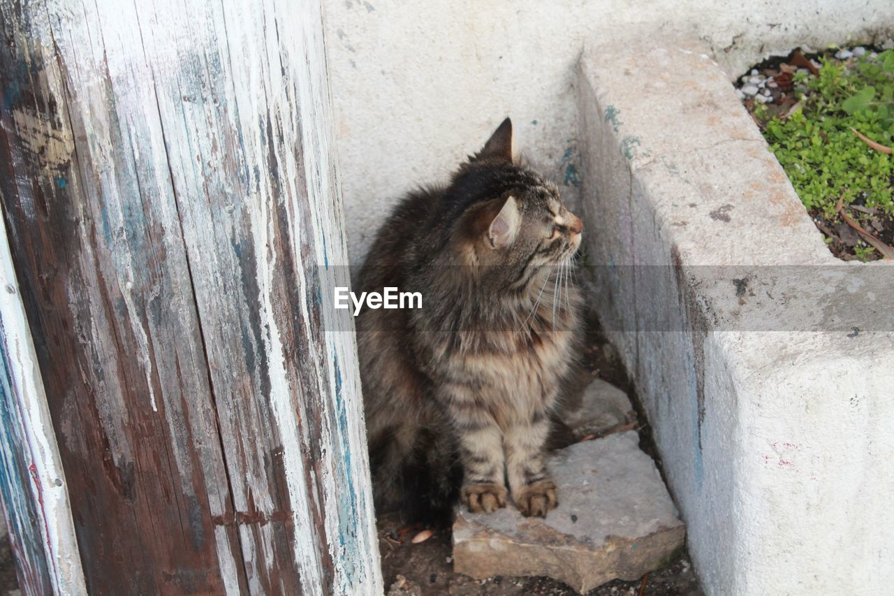 animal themes, one animal, domestic cat, mammal, feline, no people, day, outdoors, pets, domestic animals, sitting