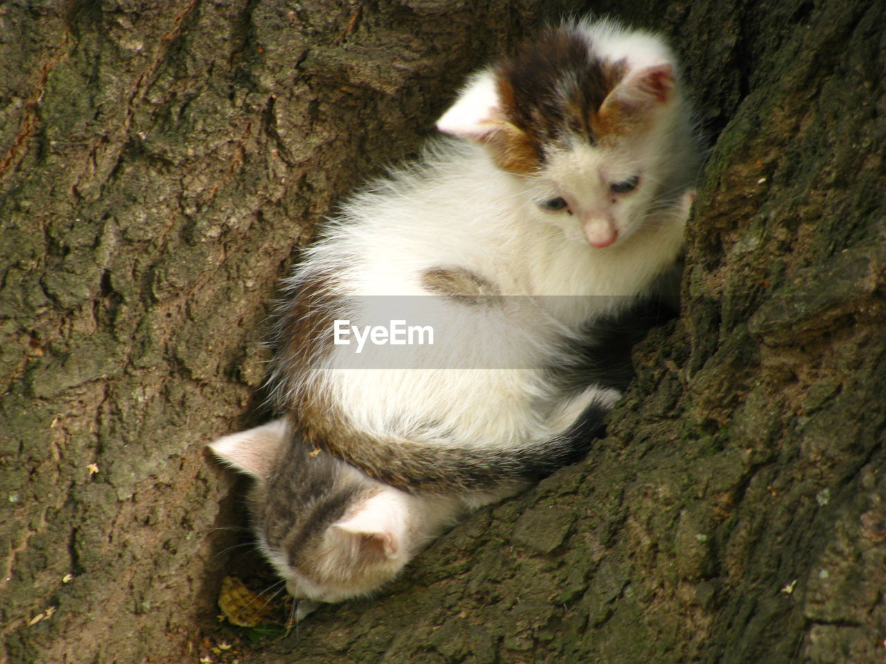 tree trunk, tree, animal themes, one animal, squirrel, no people, day, animals in the wild, mammal, animal wildlife, outdoors, looking at camera, close-up, nature, portrait