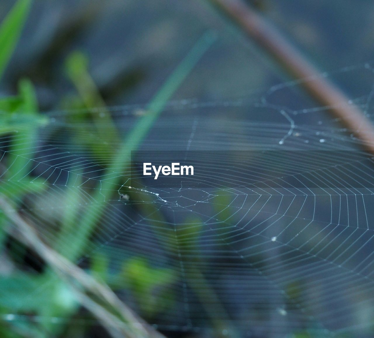 spider web, fragility, close-up, vulnerability, focus on foreground, no people, water, nature, day, beauty in nature, complexity, plant, natural pattern, selective focus, drop, pattern, intricacy, spider, outdoors, web, raindrop