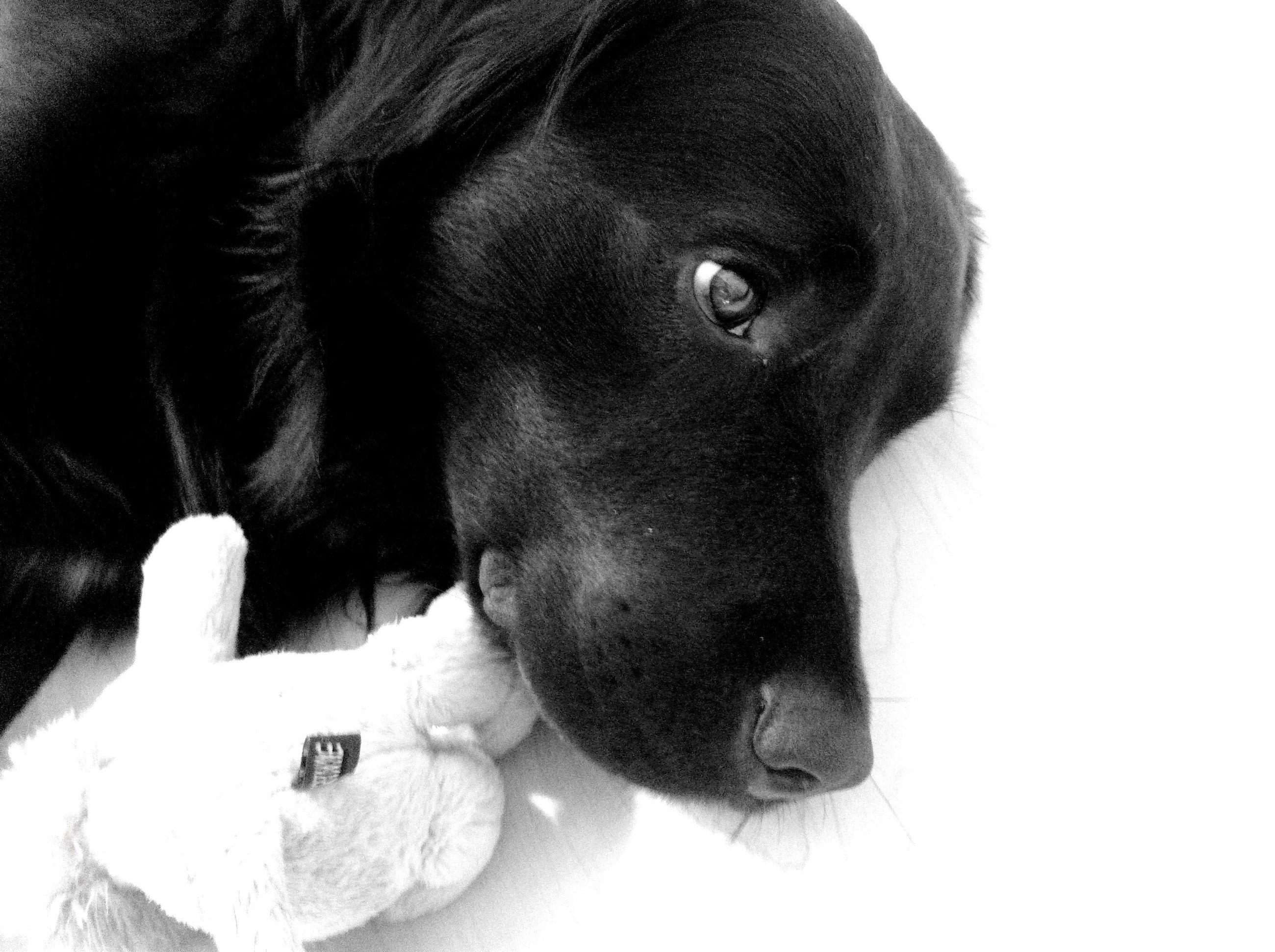dog, mammal, pets, puppy, domestic animals, close-up, no people