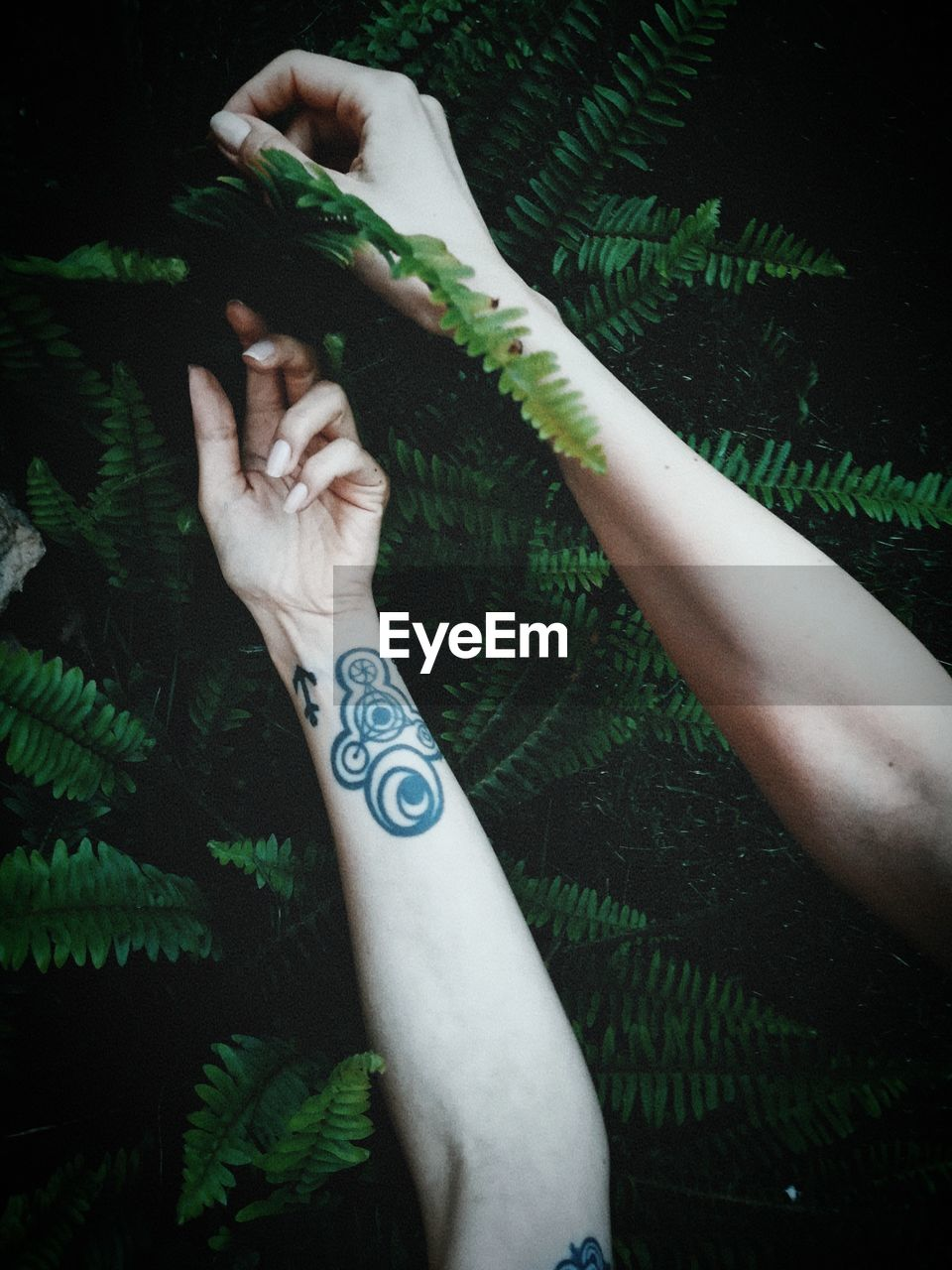 Cropped Image Of Woman Hand With Tattoo Holding Plant
