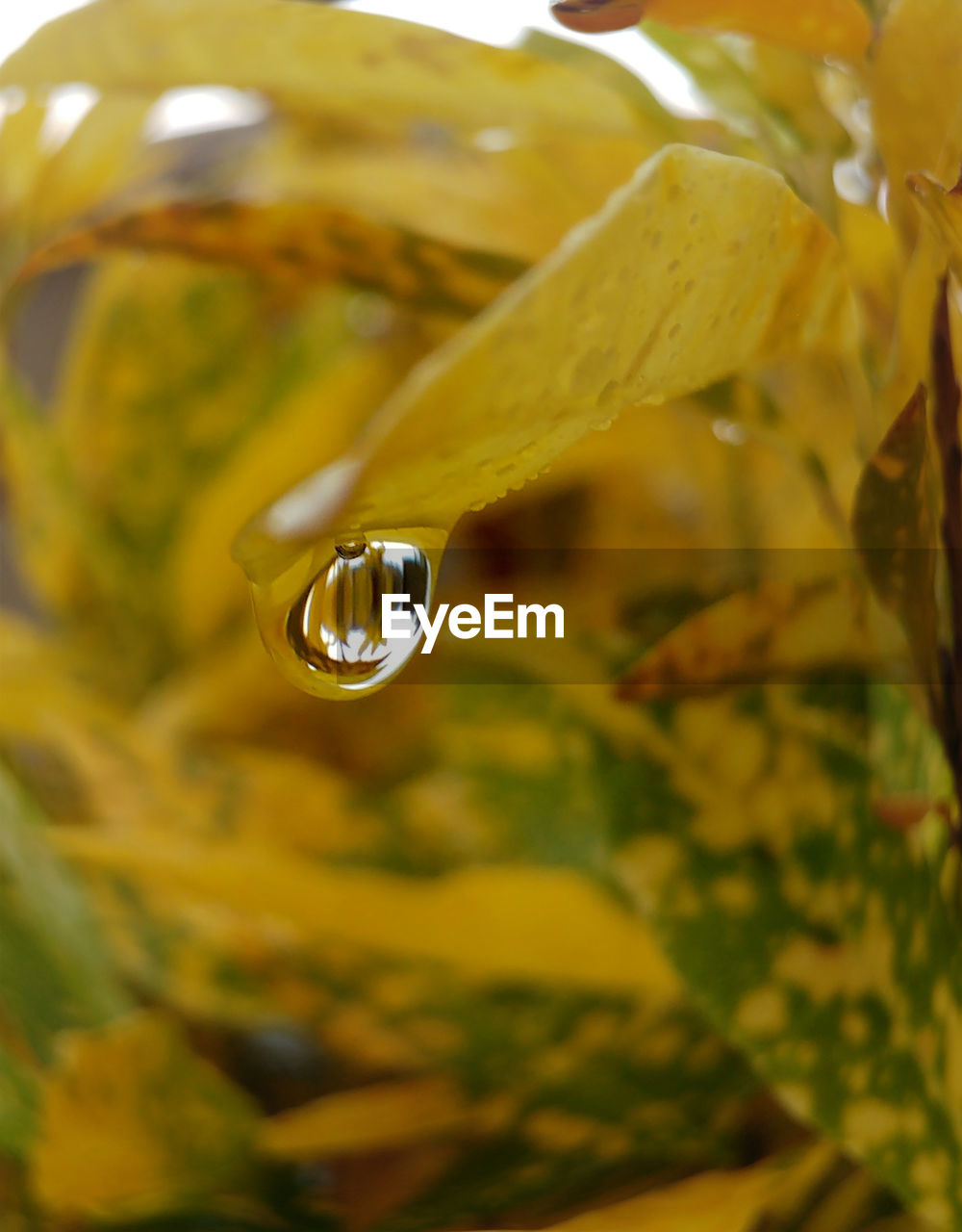 drop, plant, nature, beauty in nature, close-up, yellow, no people, growth, leaf, water, fragility, flower, outdoors, day, freshness, dripping