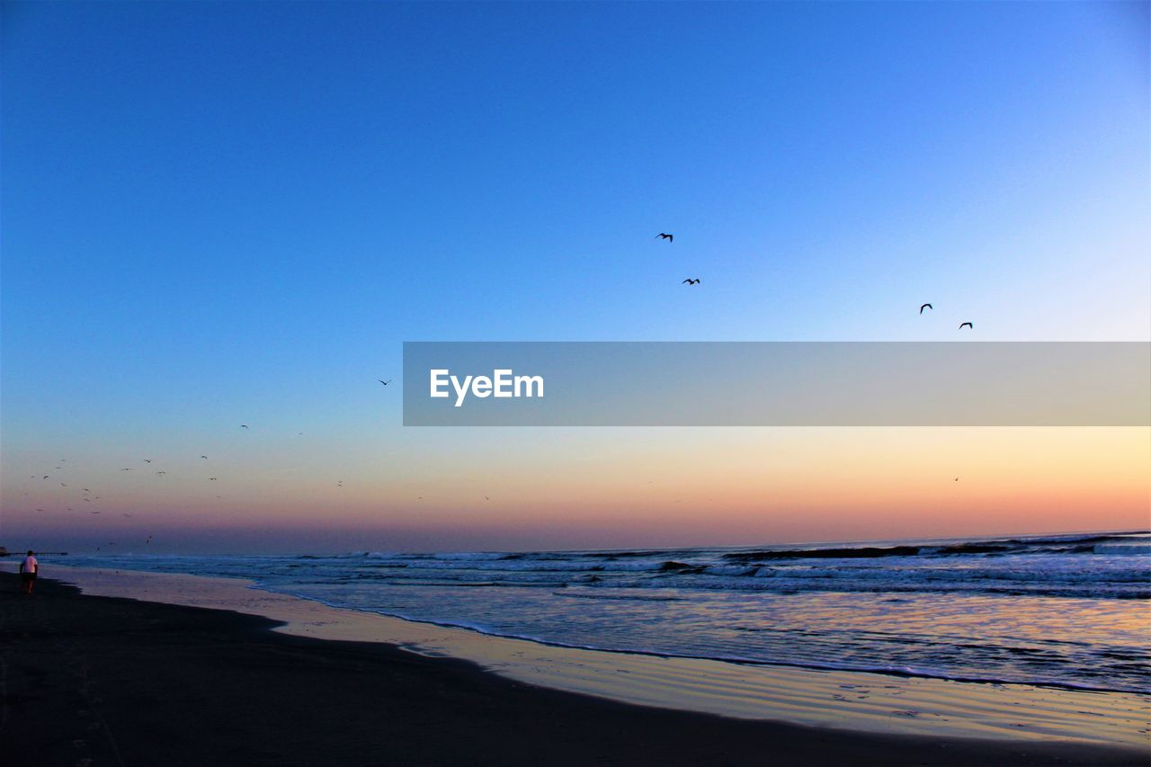 sea, flying, bird, water, sunset, beauty in nature, beach, nature, scenics, animal themes, horizon over water, tranquil scene, animals in the wild, outdoors, sky, clear sky, mid-air, flock of birds, no people, silhouette, large group of animals, blue, day