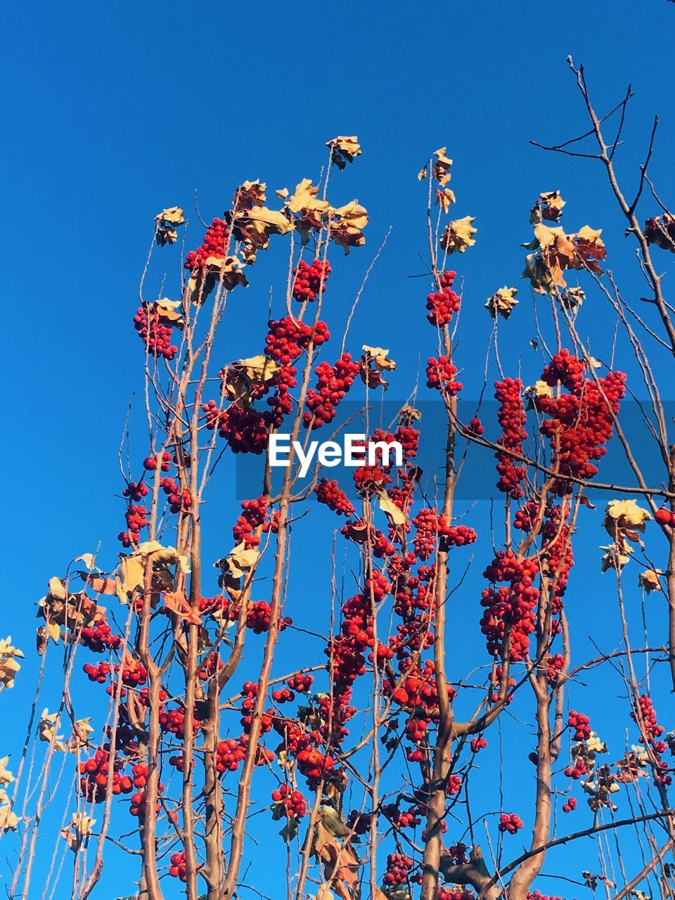 low angle view, blue, clear sky, flower, day, growth, no people, sunlight, outdoors, beauty in nature, nature, sky, fragility, tree, branch, freshness, close-up