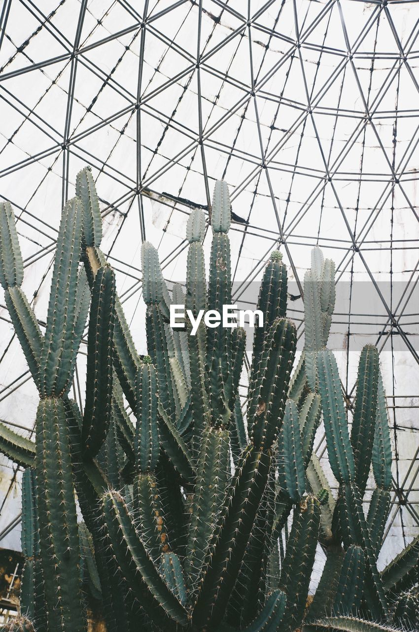 plant, day, no people, growth, succulent plant, nature, cactus, indoors, built structure, architecture, pattern, low angle view, transparent, green color, glass - material, greenhouse, beauty in nature, botany, close-up, plant nursery