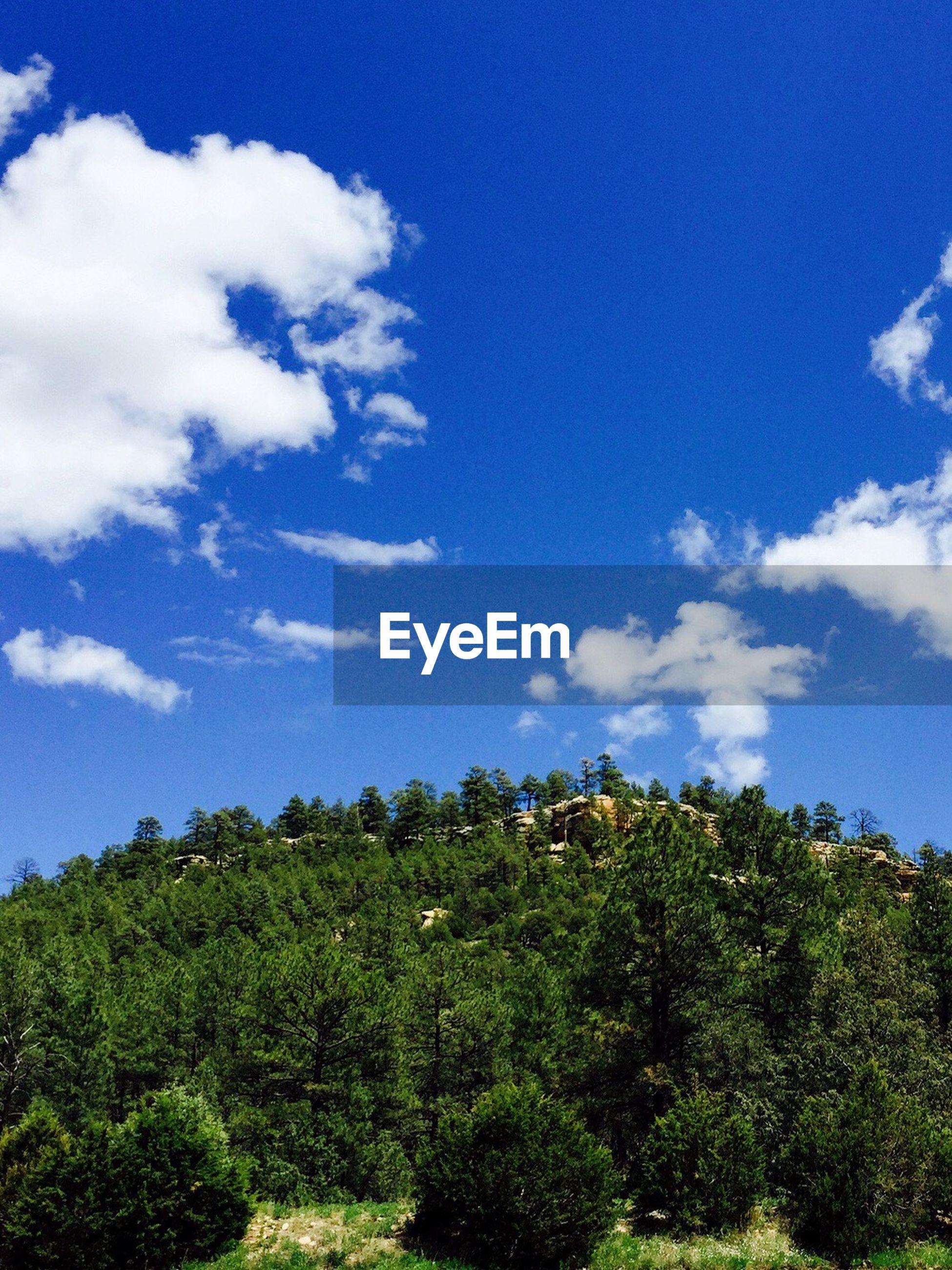 Plants on countryside landscape against blue sky