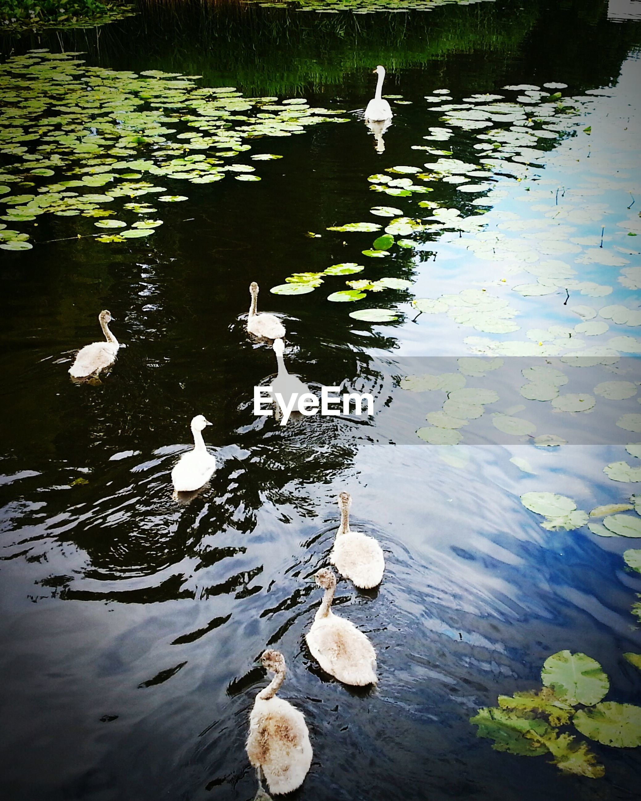 View of birds in calm water