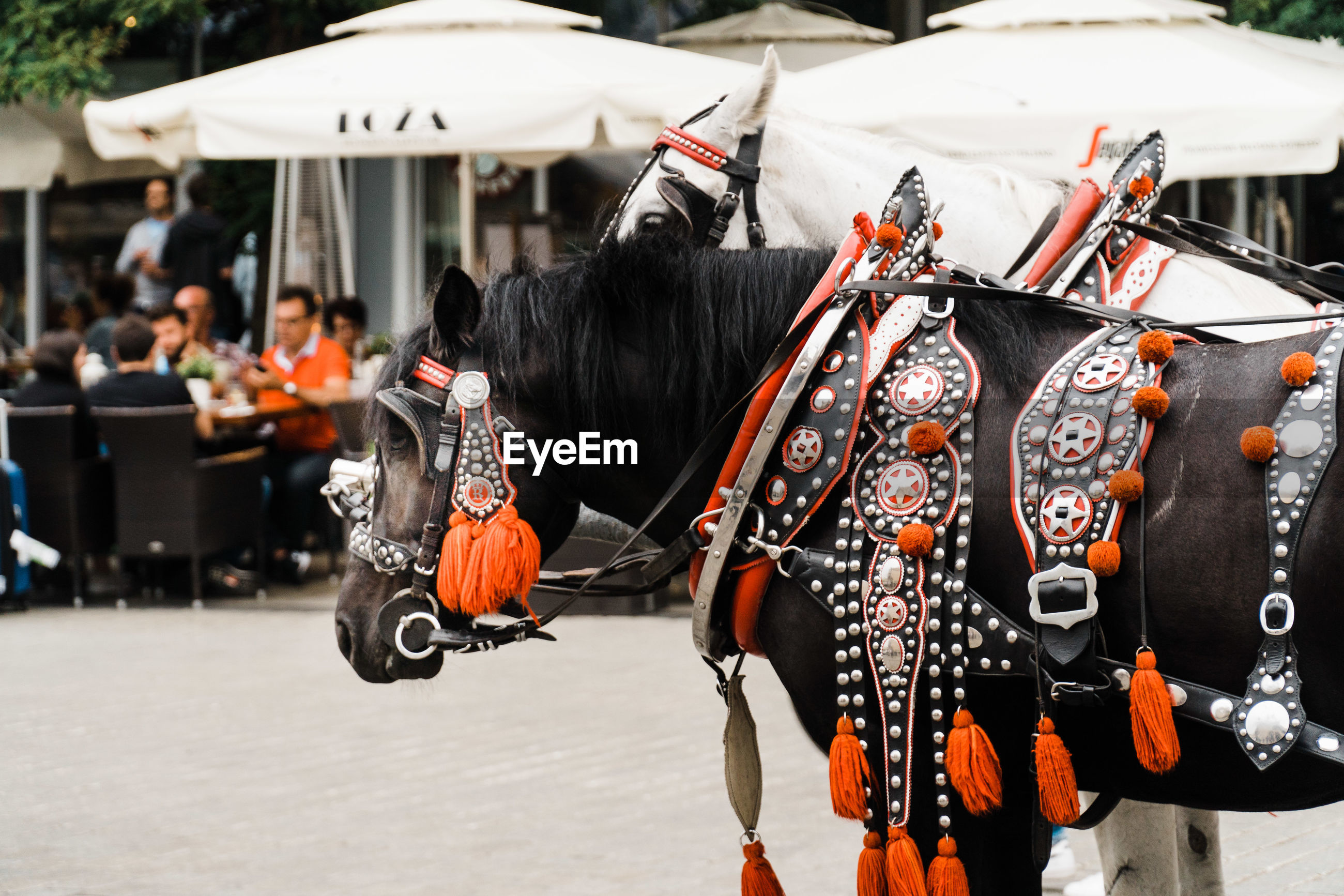 Strained horses with silver and red ornaments