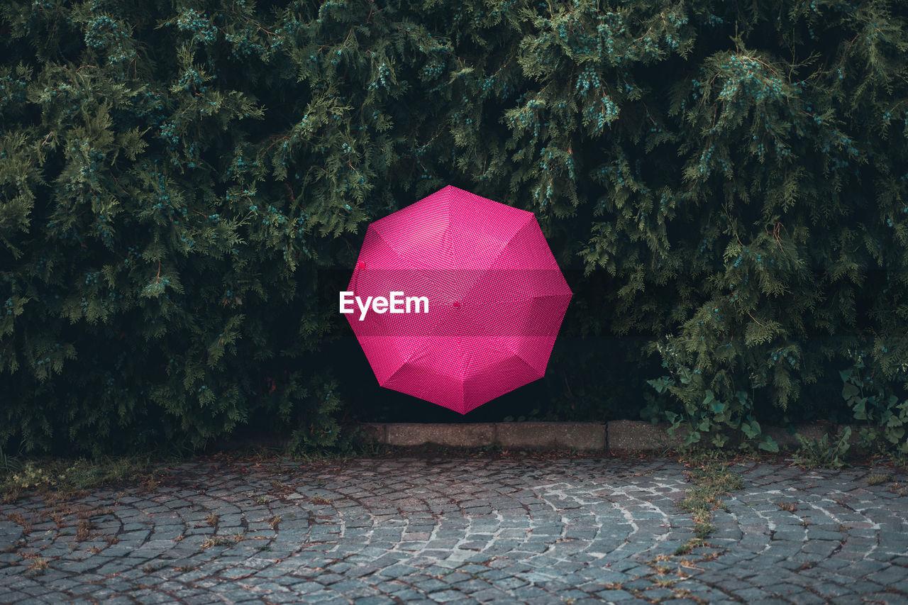 Pink Umbrella Amidst Trees