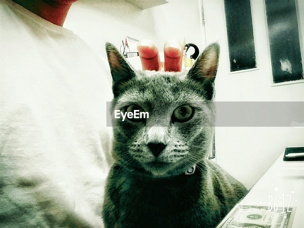 domestic cat, pets, domestic animals, mammal, animal themes, feline, one animal, cat, indoors, whisker, no people, portrait, looking at camera, close-up, day, animal hospital, vet