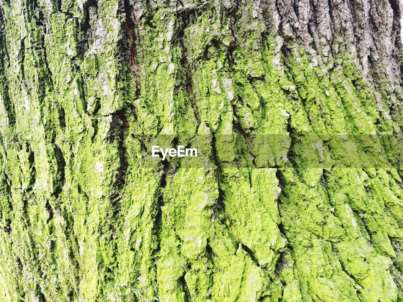nature, green color, backgrounds, full frame, growth, day, textured, no people, close-up, tree, outdoors