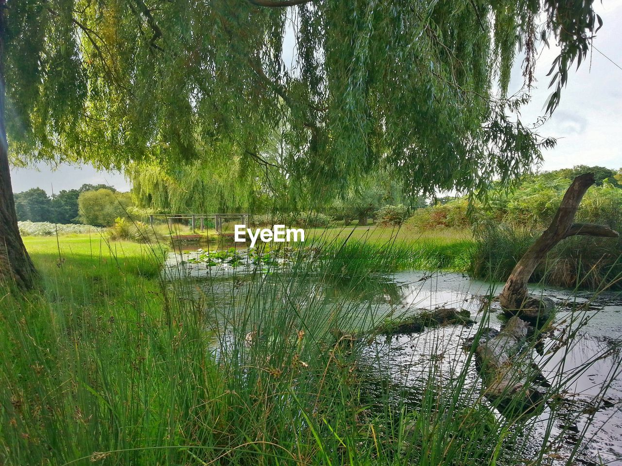 tree, water, nature, lake, growth, grass, green color, tranquil scene, beauty in nature, tranquility, reflection, scenics, outdoors, no people, day, forest, landscape, plant, swamp, sky