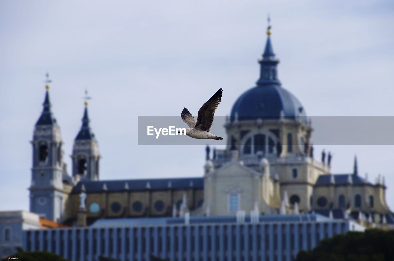 architecture, building exterior, built structure, vertebrate, place of worship, bird, building, flying, belief, sky, animal themes, animal, animals in the wild, religion, animal wildlife, spirituality, travel destinations, nature, no people, spire, seagull, outdoors, government