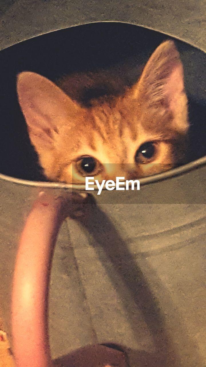 portrait, looking at camera, cat, pets, mammal, one animal, domestic, feline, domestic animals, domestic cat, close-up, indoors, people, vertebrate, animal body part, headshot, eye, whisker, animal eye, innocence