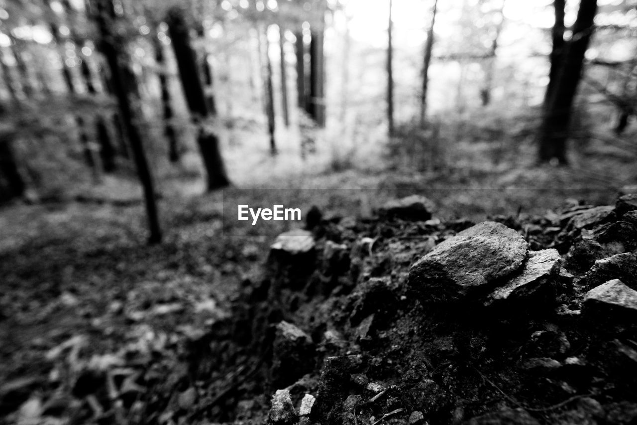 forest, land, tree, plant, nature, no people, day, tranquility, focus on foreground, growth, woodland, trunk, tree trunk, outdoors, beauty in nature, selective focus, rock, rock - object, environment, field, bark, leaves