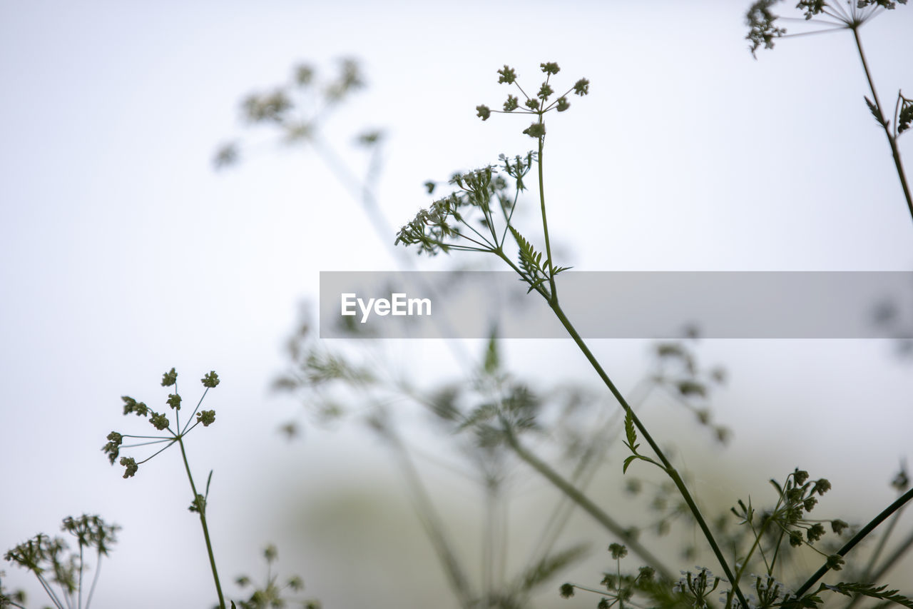 plant, growth, beauty in nature, selective focus, flower, flowering plant, nature, no people, tranquility, vulnerability, focus on foreground, fragility, close-up, day, plant stem, sky, outdoors, freshness, low angle view, field