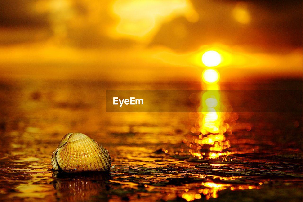 Seashell on beach against sky during sunset