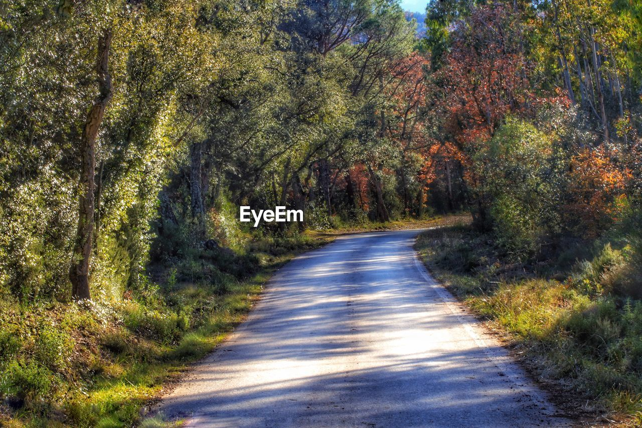 road, tree, the way forward, nature, tranquil scene, no people, plant, day, landscape, tranquility, transportation, grass, asphalt, outdoors, forest, scenics, single lane road, curve, growth, winding road, beauty in nature, rural scene