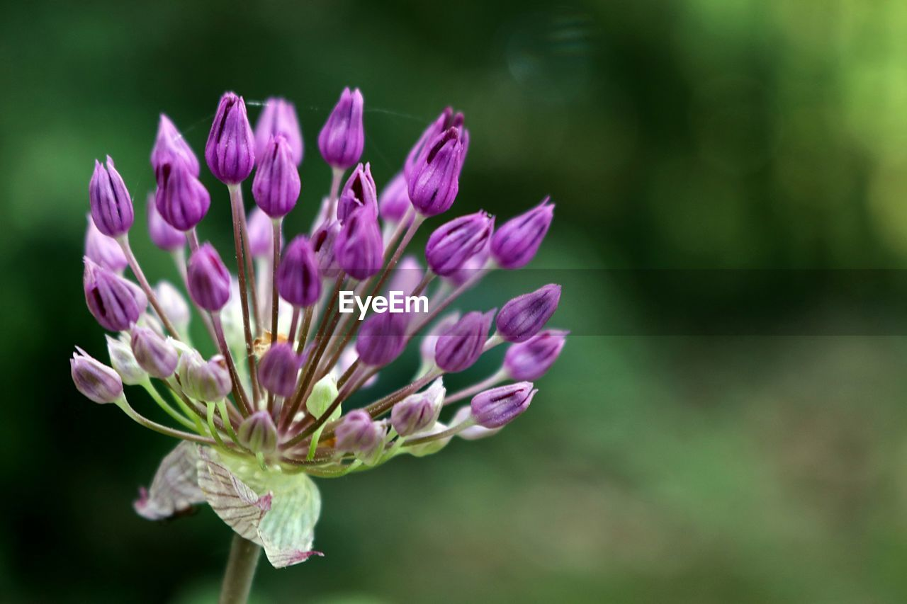 flower, nature, fragility, growth, beauty in nature, plant, freshness, petal, no people, close-up, outdoors, flower head, day, blooming