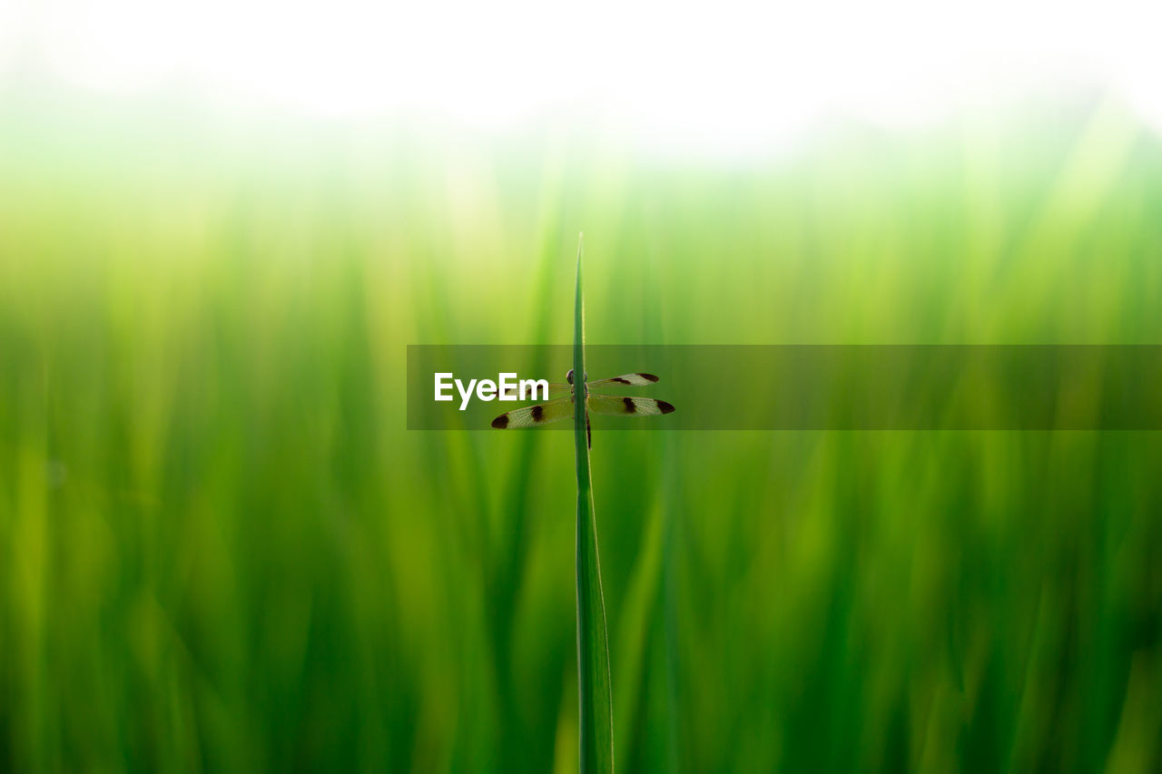 plant, green color, growth, nature, beauty in nature, close-up, no people, day, selective focus, focus on foreground, grass, animal, animal themes, outdoors, fragility, tranquility, vulnerability, freshness, animal wildlife, one animal, blade of grass