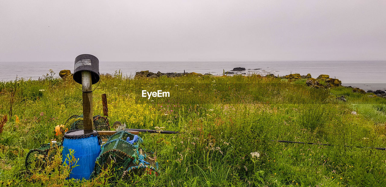 water, sea, sky, horizon, plant, grass, horizon over water, land, nature, beauty in nature, tranquil scene, tranquility, scenics - nature, growth, no people, green color, beach, day, field, outdoors
