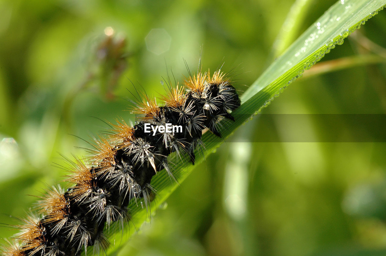 plant, close-up, invertebrate, insect, growth, animals in the wild, animal wildlife, day, nature, one animal, no people, animal, green color, focus on foreground, beauty in nature, animal themes, outdoors, selective focus, caterpillar, plant part