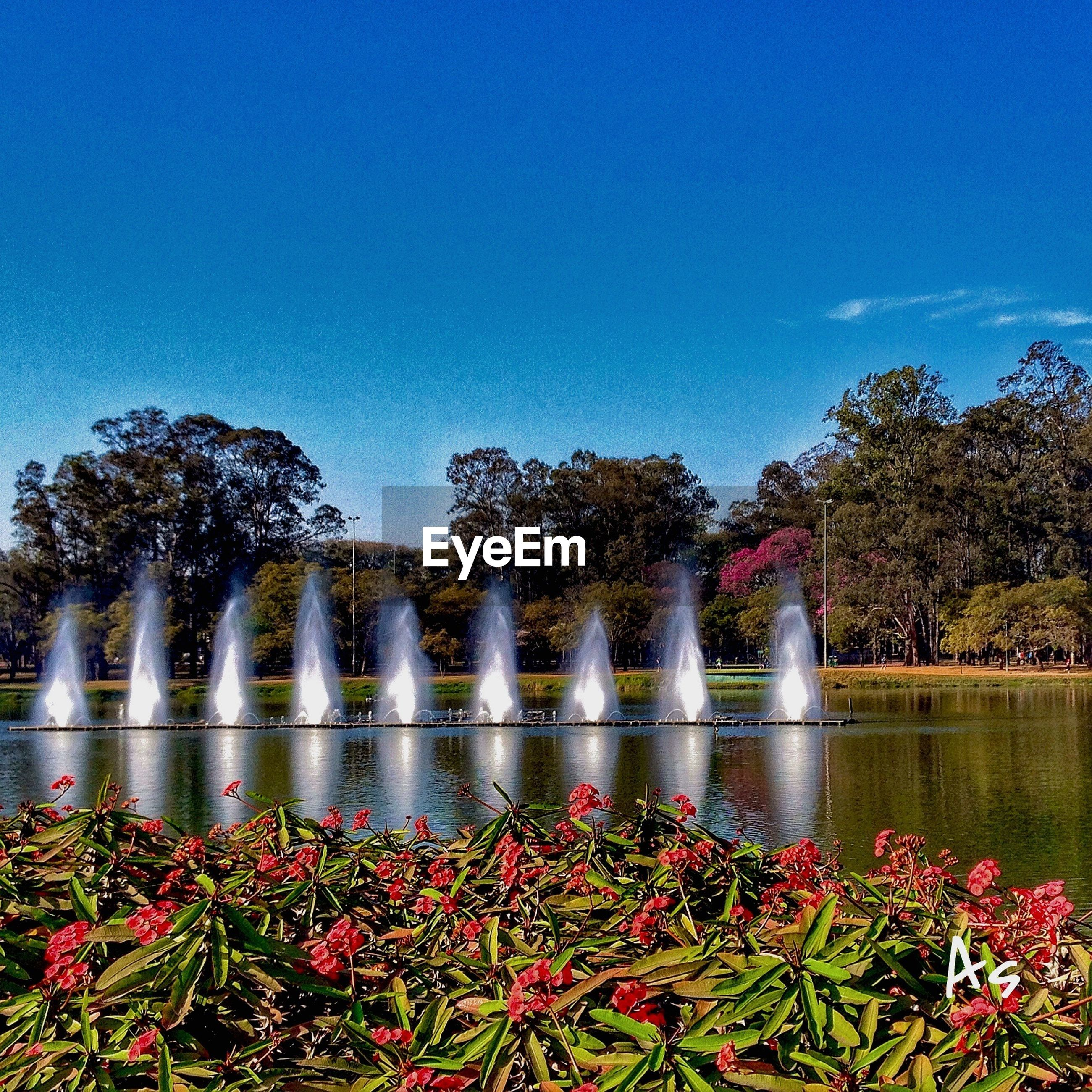 red, growth, tree, plant, flower, freshness, clear sky, blue, topiary, springtime, formal garden, fountain, nature, hedge, in a row, garden, beauty in nature, day, botany, flowerbed, scenics, spraying, tranquil scene, fragility, tranquility, standing water, outdoors, flowering