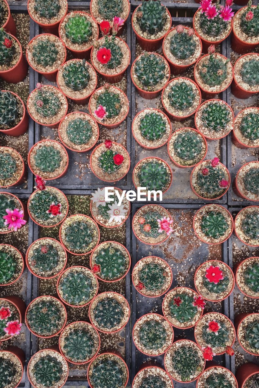 Full Frame Shot Of Cacti