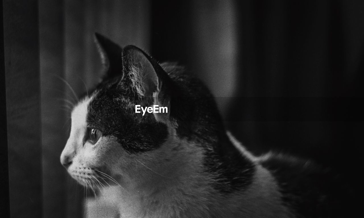 animal themes, animal, one animal, mammal, pets, domestic animals, domestic, cat, feline, domestic cat, vertebrate, looking away, close-up, looking, focus on foreground, no people, animal body part, indoors, whisker, home interior, animal head, profile view, animal eye