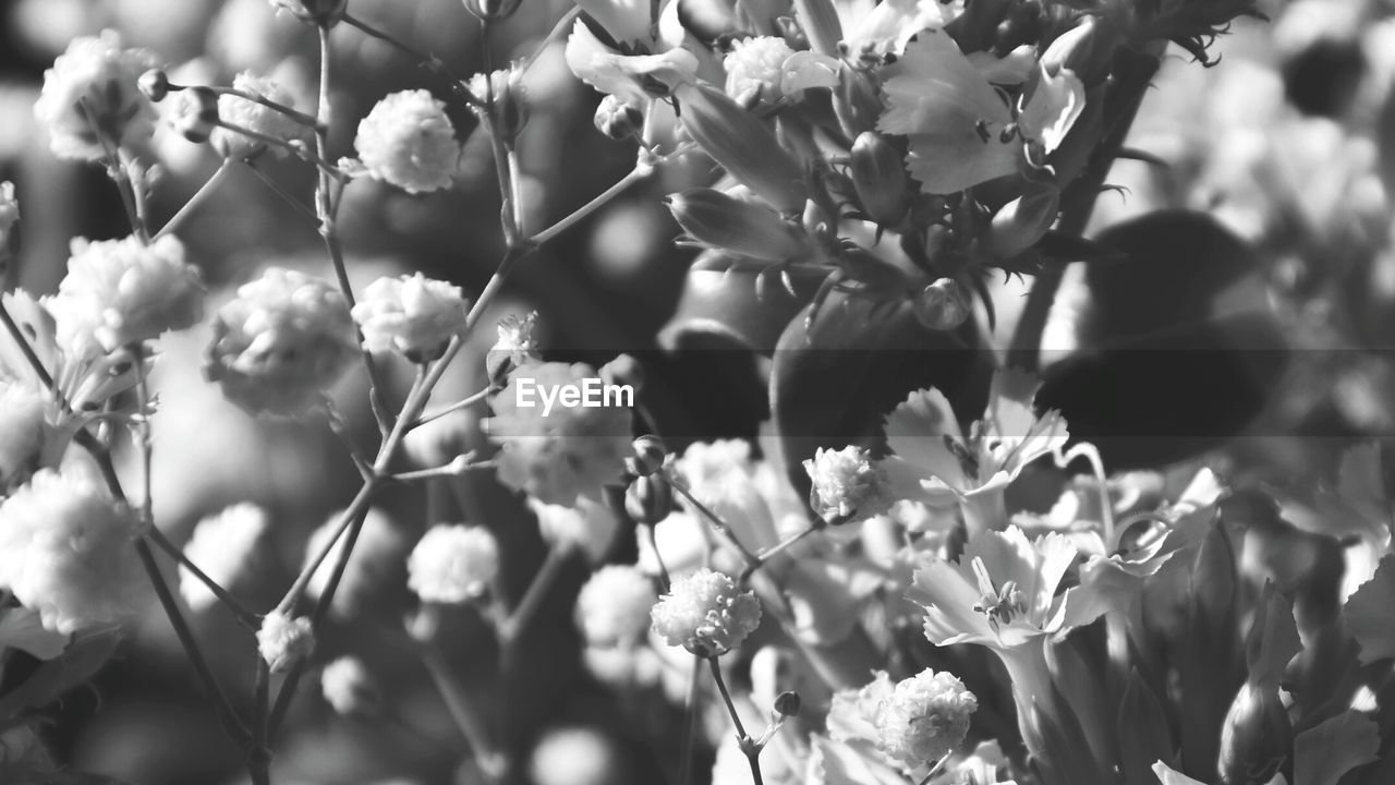growth, nature, flower, beauty in nature, blossom, fragility, freshness, tree, plant, no people, outdoors, day, branch, blooming, close-up