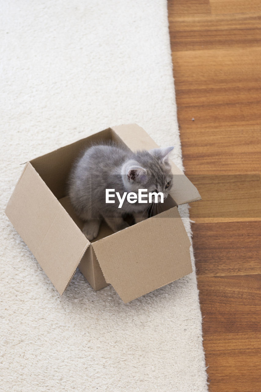animal themes, mammal, animal, cardboard box, cardboard, box, container, one animal, domestic, pets, box - container, vertebrate, indoors, domestic animals, domestic cat, cat, feline, no people, flooring, high angle view, whisker