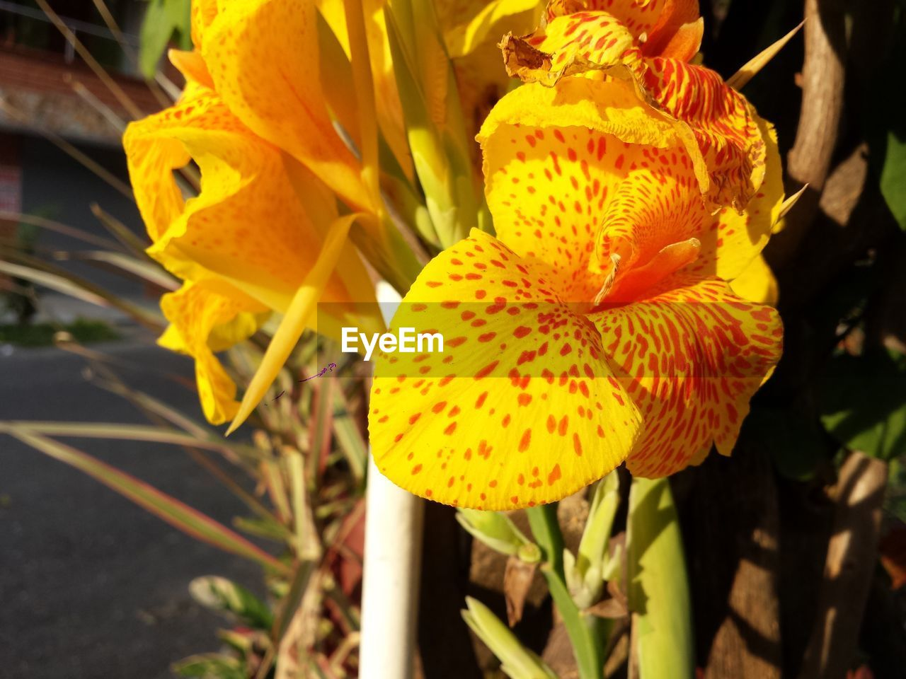 flower, petal, fragility, yellow, growth, beauty in nature, flower head, nature, freshness, day, plant, outdoors, close-up, no people, blooming, day lily