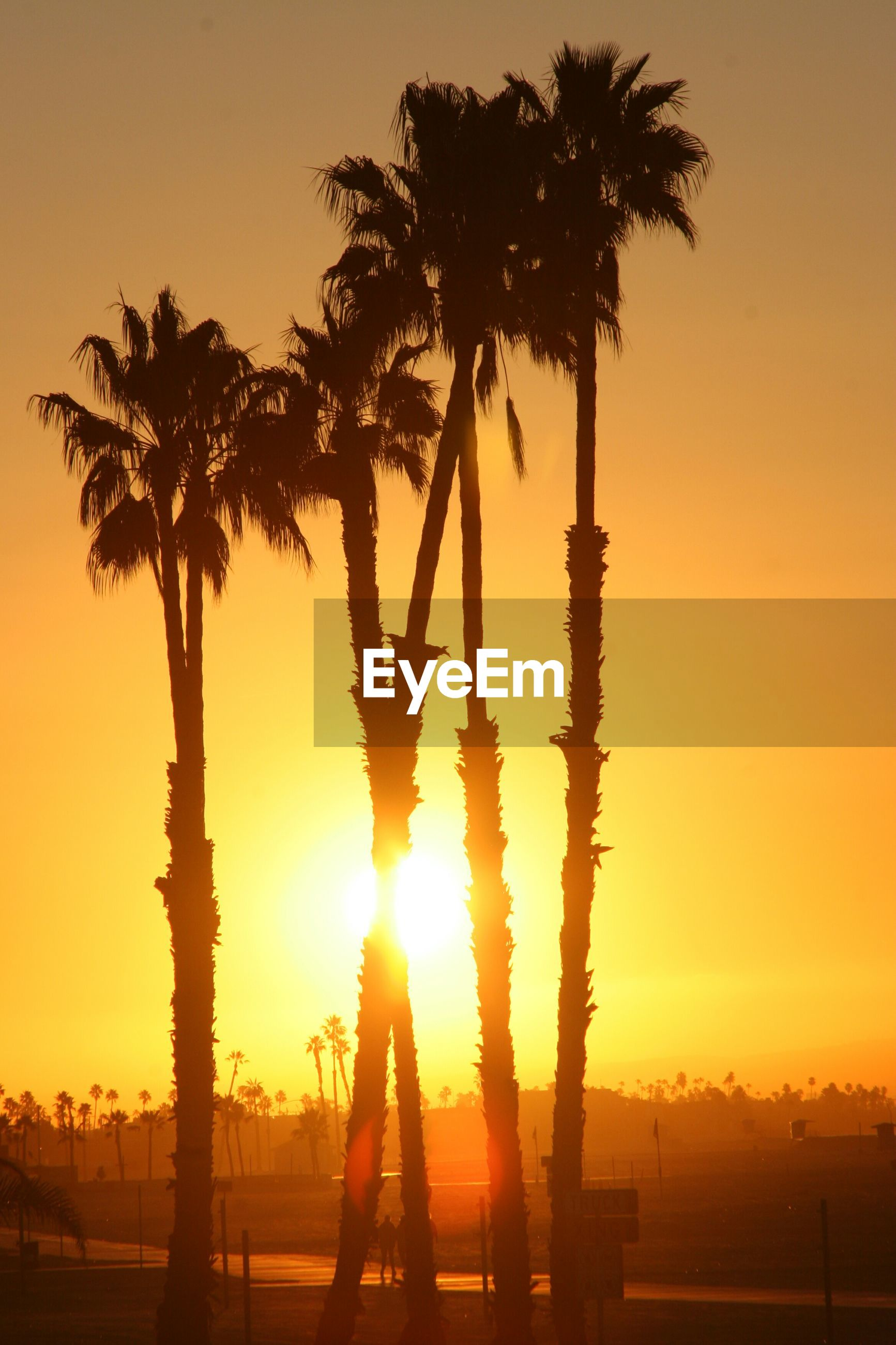 sunset, palm tree, sun, silhouette, tree, orange color, tranquility, tranquil scene, beauty in nature, scenics, nature, sunlight, sky, idyllic, tree trunk, growth, back lit, sunbeam, lens flare, outdoors
