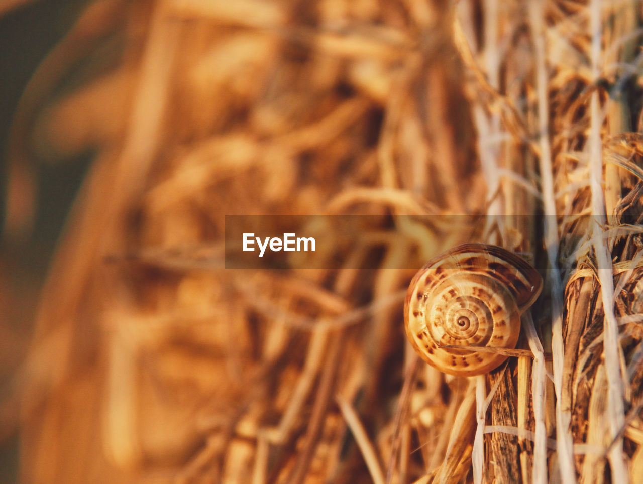 plant, close-up, selective focus, gastropod, mollusk, no people, nature, day, shell, snail, invertebrate, animal wildlife, land, animal shell, dry, growth, field, hay, animal themes, animal