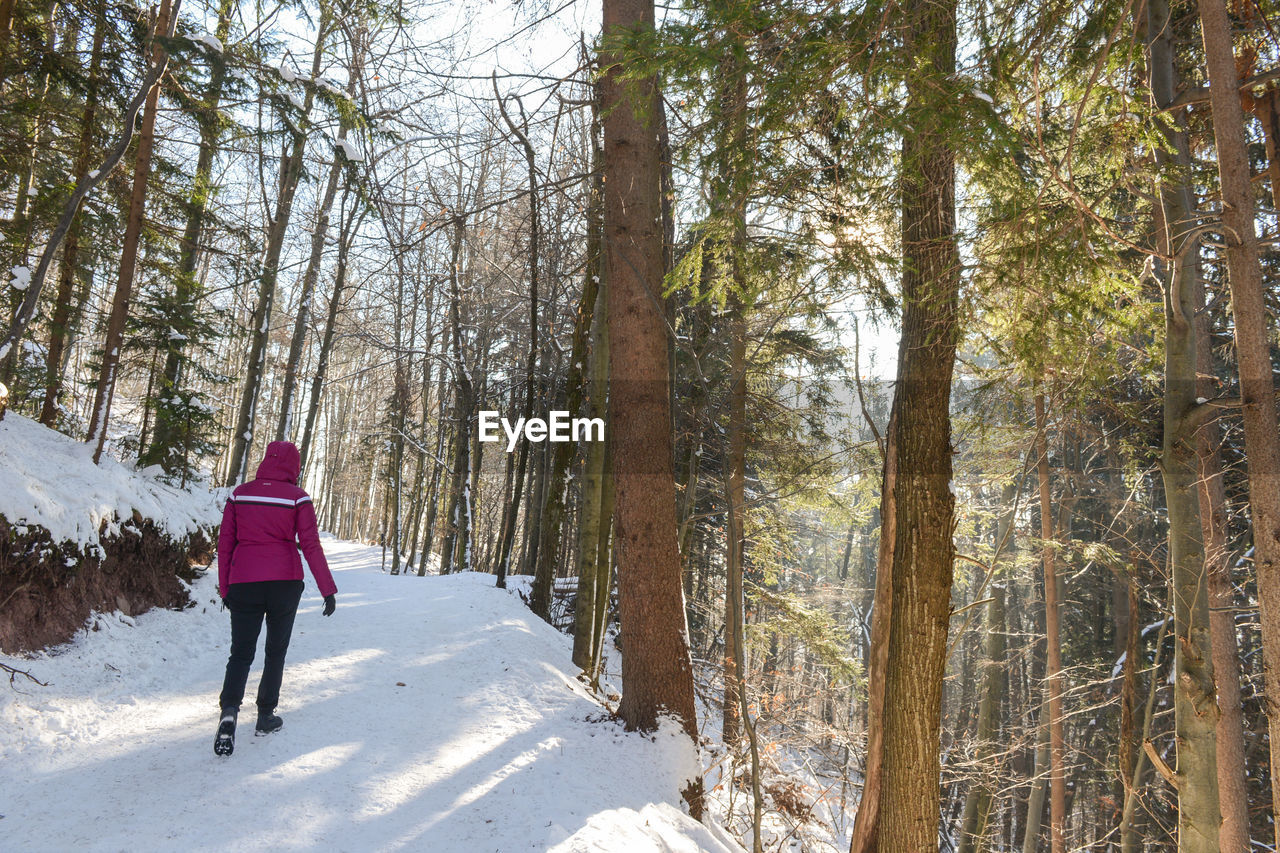 winter, snow, cold temperature, tree, nature, one person, forest, full length, leisure activity, day, lifestyles, real people, sunlight, outdoors, beauty in nature, warm clothing, adventure, women, one woman only, only women, sky, young adult, adult, adults only, people