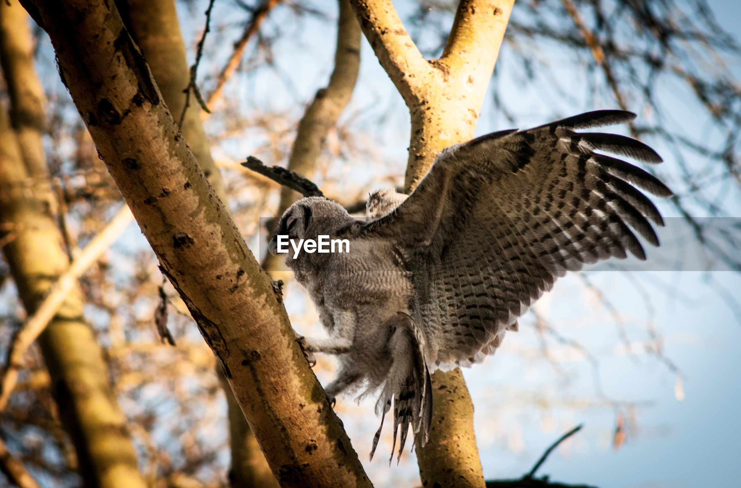 Low angle view of owl perching on tree against sky