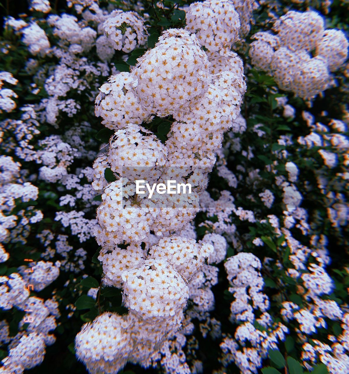 growth, no people, close-up, beauty in nature, plant, sea life, nature, animal wildlife, undersea, fragility, vulnerability, animals in the wild, coral, day, marine, underwater, sea, animal, high angle view, flowering plant, flower head, lichen