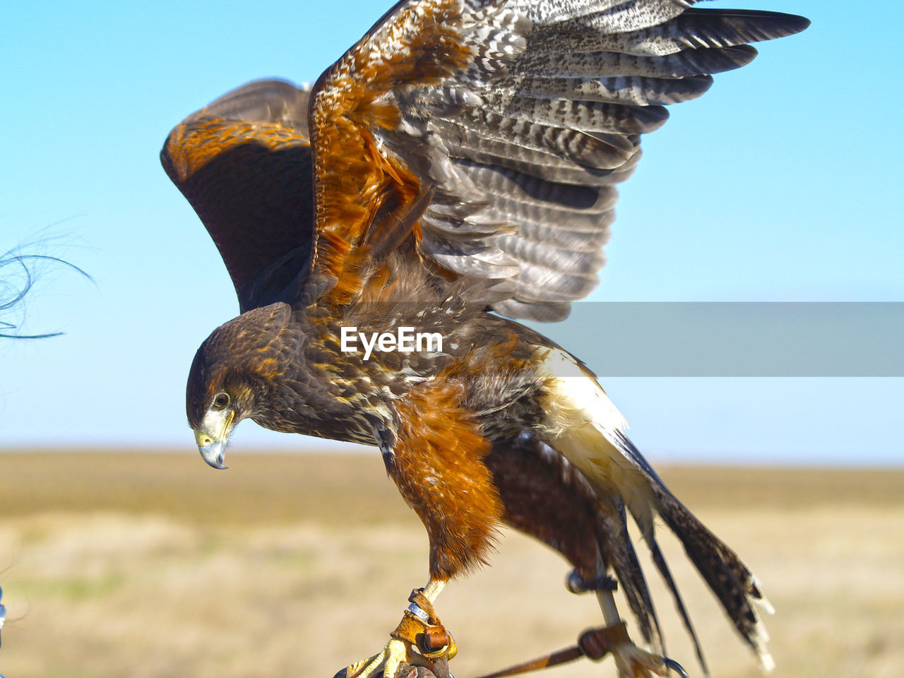 Close-up side view of a bird against clear sky