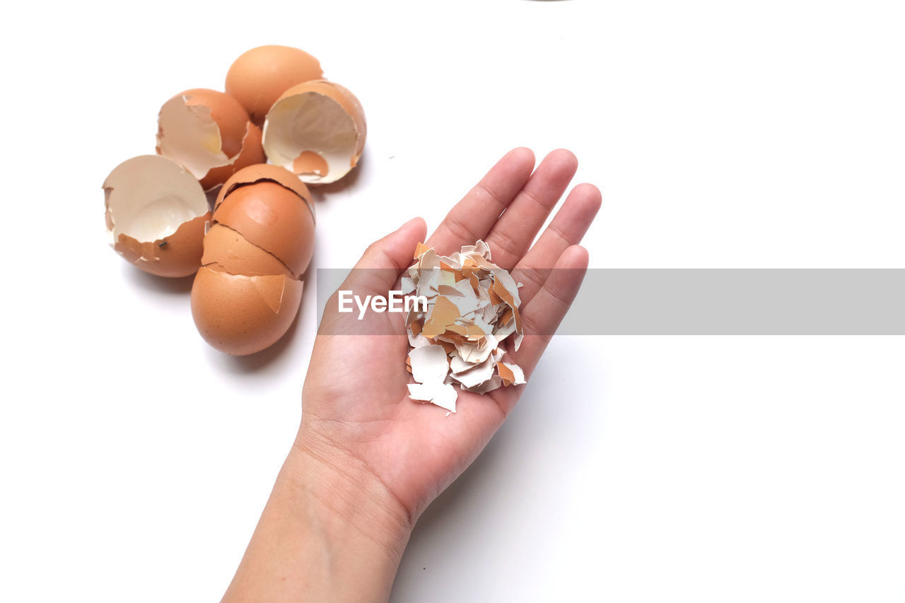 human hand, hand, white background, holding, human body part, studio shot, one person, unrecognizable person, personal perspective, indoors, egg, body part, food, food and drink, copy space, close-up, shell, cut out, lifestyles, finger